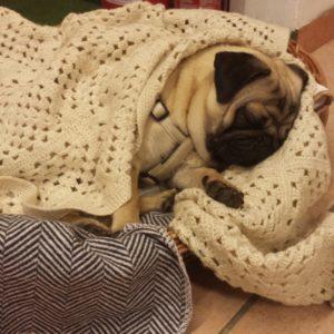 Otto der Kleine – der Therapiehund